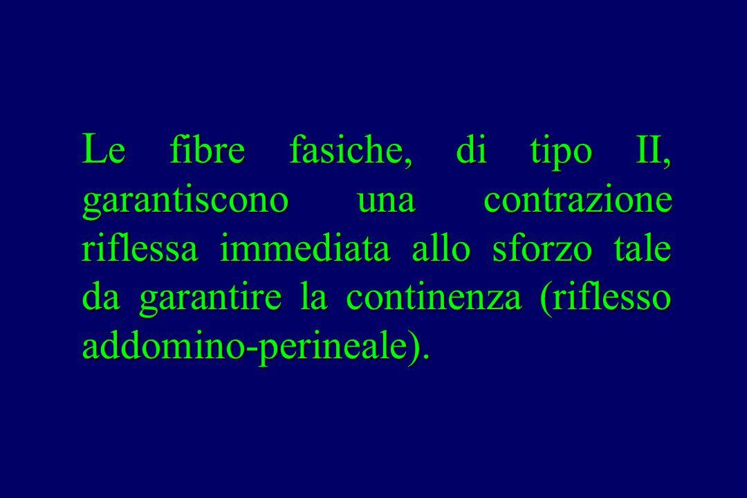 L e fibre fasiche, di tipo II, garantiscono una contrazione riflessa immediata allo sforzo tale da garantire la continenza (riflesso addomino-perineal