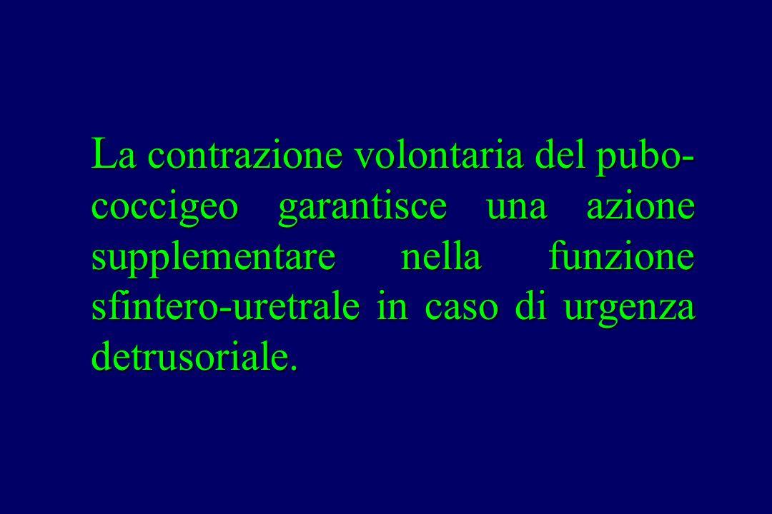 L a contrazione volontaria del pubo- coccigeo garantisce una azione supplementare nella funzione sfintero-uretrale in caso di urgenza detrusoriale.