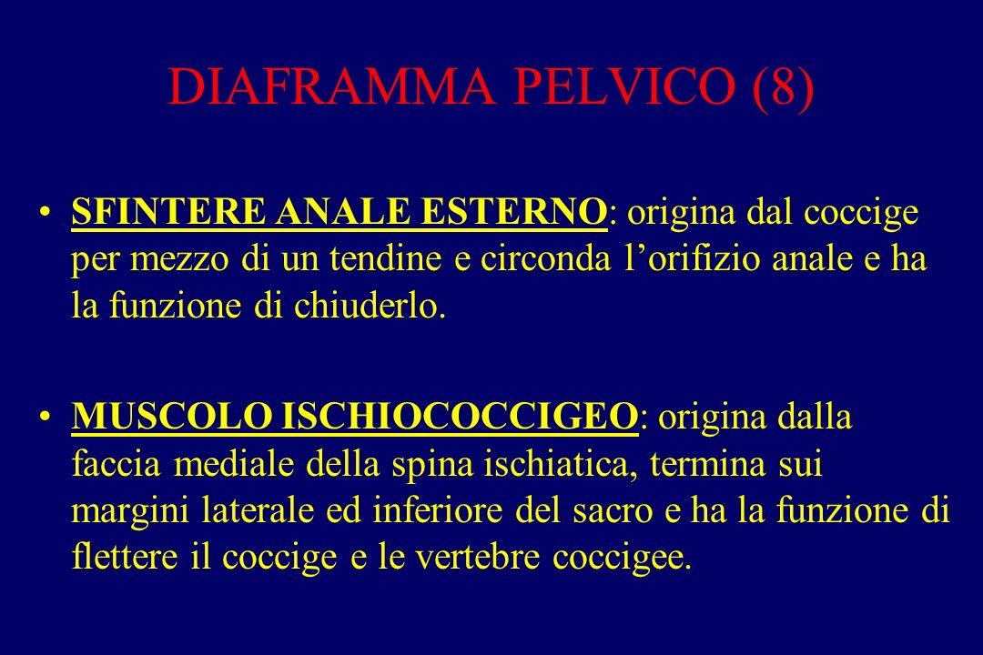 DIAFRAMMA PELVICO (8) SFINTERE ANALE ESTERNO: origina dal coccige per mezzo di un tendine e circonda l'orifizio anale e ha la funzione di chiuderlo. M