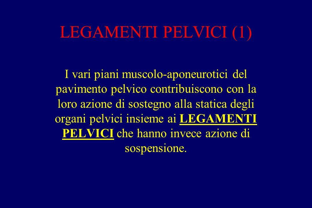 LEGAMENTI PELVICI (1) I vari piani muscolo-aponeurotici del pavimento pelvico contribuiscono con la loro azione di sostegno alla statica degli organi pelvici insieme ai LEGAMENTI PELVICI che hanno invece azione di sospensione.
