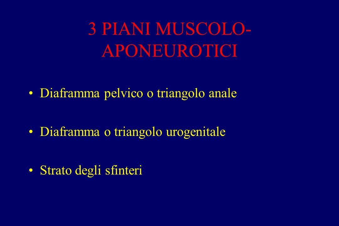 3 PIANI MUSCOLO- APONEUROTICI Diaframma pelvico o triangolo anale Diaframma o triangolo urogenitale Strato degli sfinteri