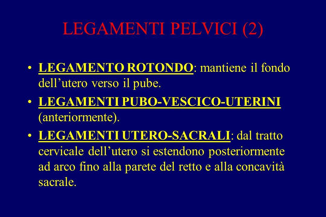 LEGAMENTI PELVICI (2) LEGAMENTO ROTONDO: mantiene il fondo dell'utero verso il pube. LEGAMENTI PUBO-VESCICO-UTERINI (anteriormente). LEGAMENTI UTERO-S