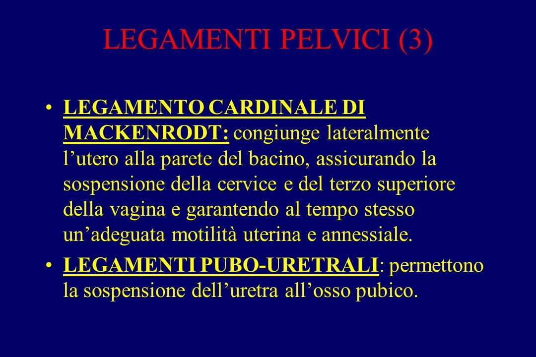LEGAMENTI PELVICI (3) LEGAMENTO CARDINALE DI MACKENRODT: congiunge lateralmente l'utero alla parete del bacino, assicurando la sospensione della cervi