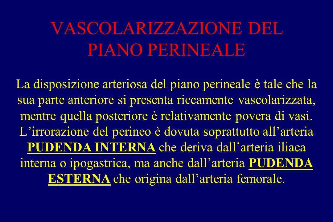 VASCOLARIZZAZIONE DEL PIANO PERINEALE La disposizione arteriosa del piano perineale è tale che la sua parte anteriore si presenta riccamente vascolari