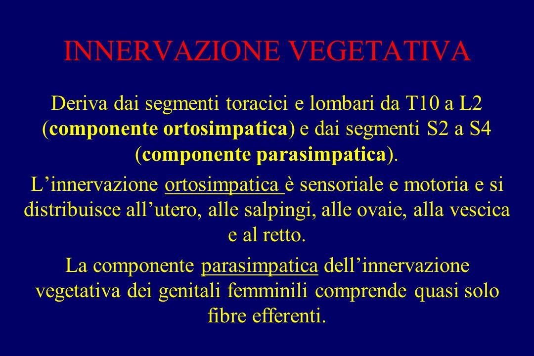 INNERVAZIONE VEGETATIVA Deriva dai segmenti toracici e lombari da T10 a L2 (componente ortosimpatica) e dai segmenti S2 a S4 (componente parasimpatica).