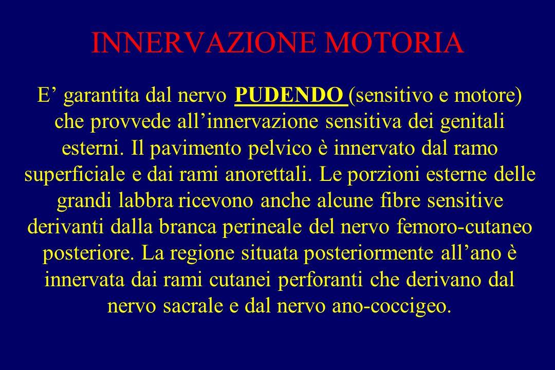 INNERVAZIONE MOTORIA E' garantita dal nervo PUDENDO (sensitivo e motore) che provvede all'innervazione sensitiva dei genitali esterni. Il pavimento pe
