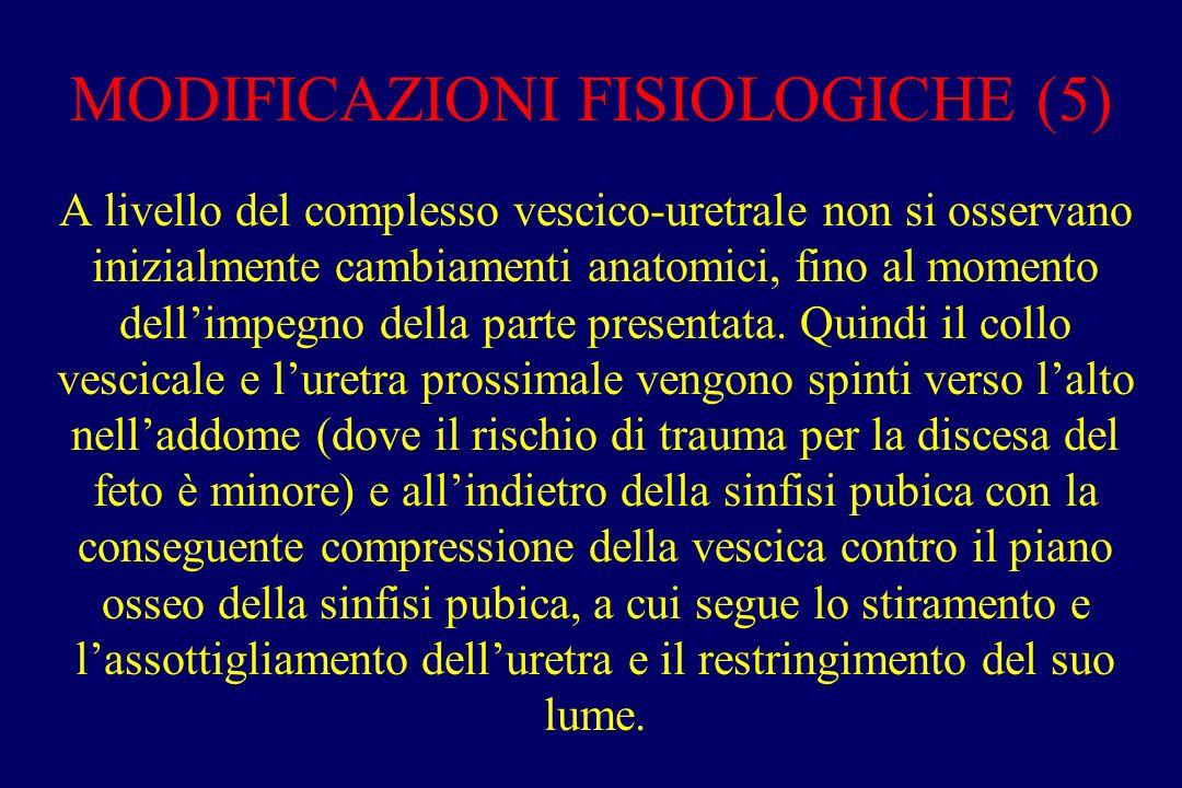 MODIFICAZIONI FISIOLOGICHE (5) A livello del complesso vescico-uretrale non si osservano inizialmente cambiamenti anatomici, fino al momento dell'impegno della parte presentata.