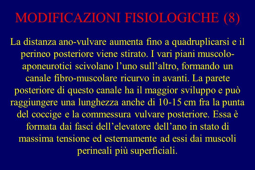 MODIFICAZIONI FISIOLOGICHE (8) La distanza ano-vulvare aumenta fino a quadruplicarsi e il perineo posteriore viene stirato. I vari piani muscolo- apon
