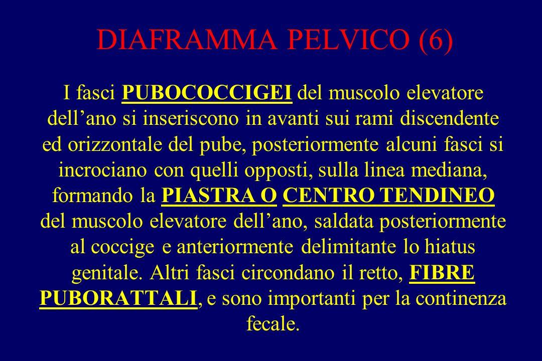 DIAFRAMMA PELVICO (7).