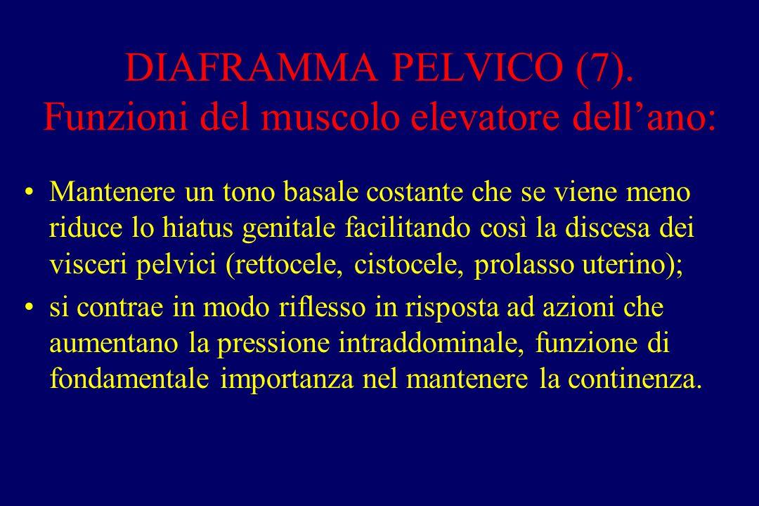 DIAFRAMMA PELVICO (7). Funzioni del muscolo elevatore dell'ano: Mantenere un tono basale costante che se viene meno riduce lo hiatus genitale facilita