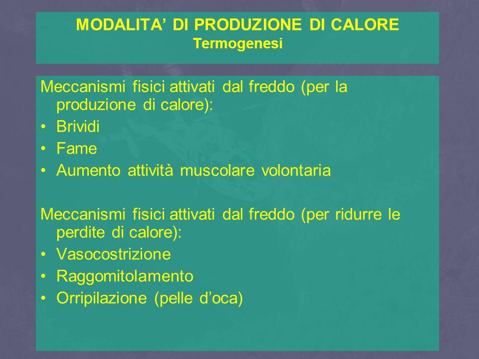 MODALITA' DI PRODUZIONE DI CALORE Termogenesi Meccanismi fisici attivati dal freddo (per la produzione di calore): Brividi Fame Aumento attività musco