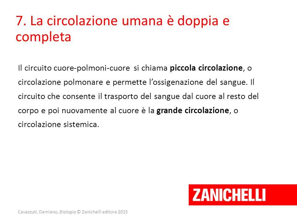 Cavazzuti, Damiano, Biologia © Zanichelli editore 2015 7. La circolazione umana è doppia e completa Il circuito cuore-polmoni-cuore si chiama piccola