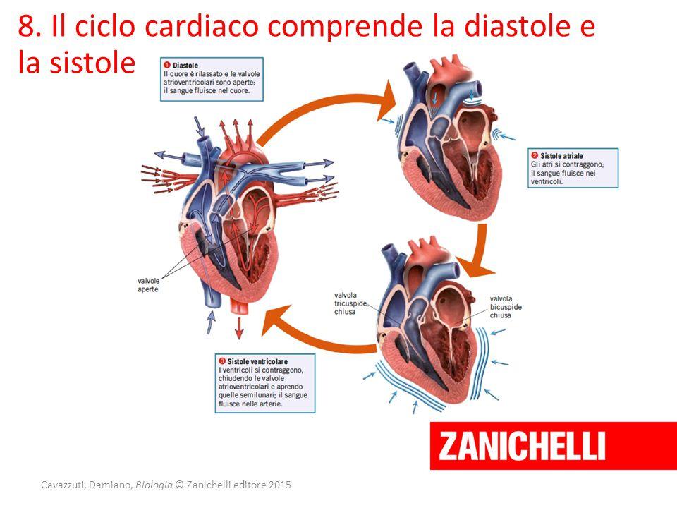 Cavazzuti, Damiano, Biologia © Zanichelli editore 2015 8. Il ciclo cardiaco comprende la diastole e la sistole