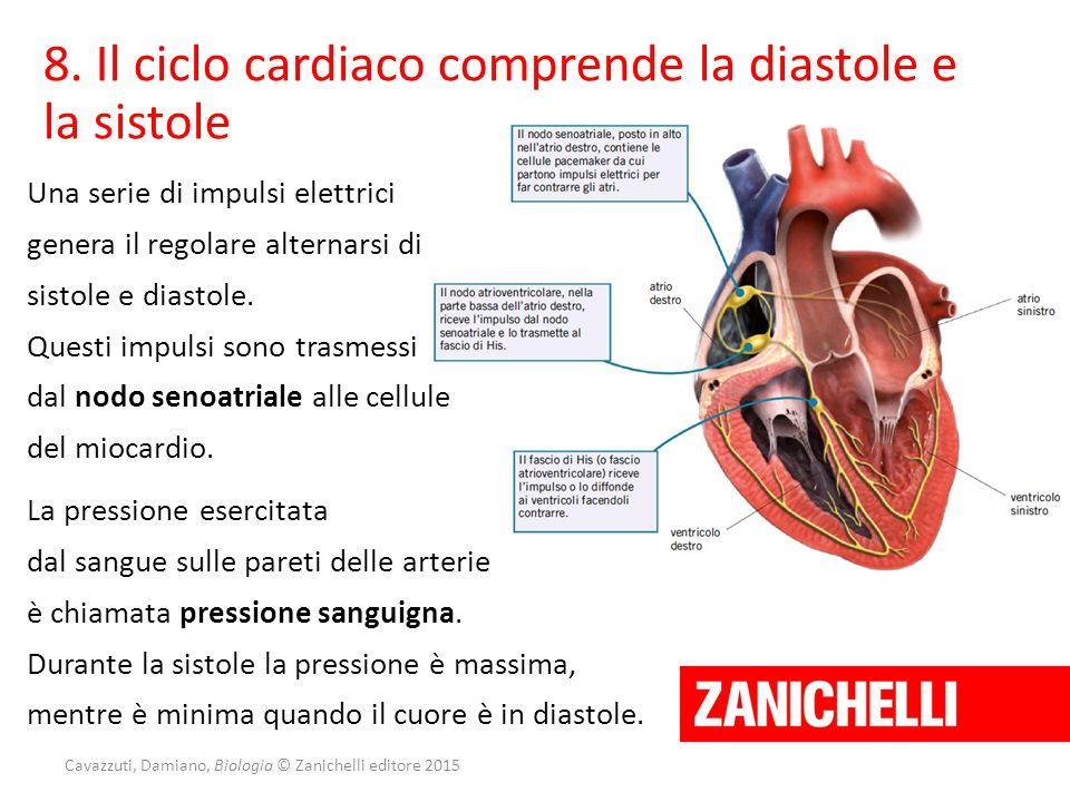 Cavazzuti, Damiano, Biologia © Zanichelli editore 2015 8. Il ciclo cardiaco comprende la diastole e la sistole Una serie di impulsi elettrici genera i