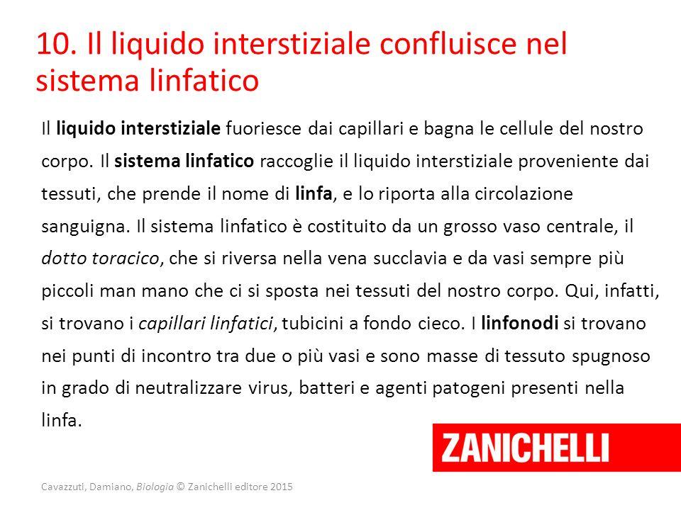 Cavazzuti, Damiano, Biologia © Zanichelli editore 2015 10. Il liquido interstiziale confluisce nel sistema linfatico Il liquido interstiziale fuoriesc