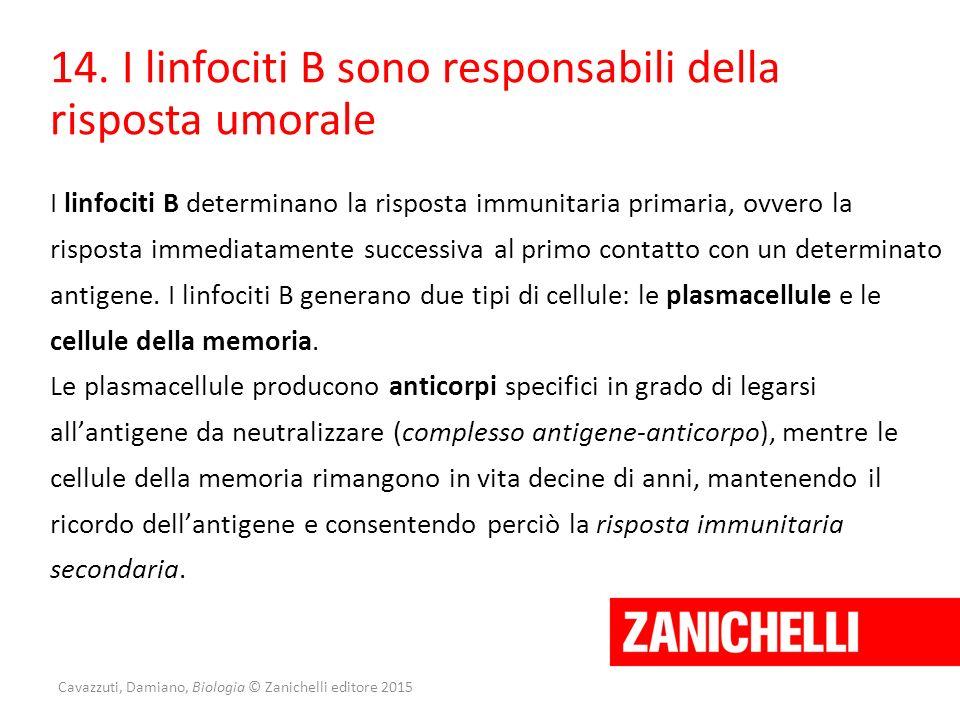 Cavazzuti, Damiano, Biologia © Zanichelli editore 2015 14. I linfociti B sono responsabili della risposta umorale I linfociti B determinano la rispost