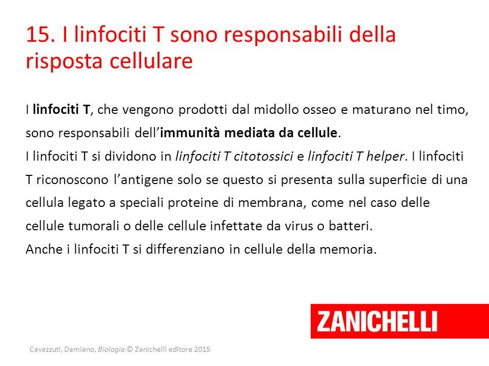 Cavazzuti, Damiano, Biologia © Zanichelli editore 2015 15. I linfociti T sono responsabili della risposta cellulare I linfociti T, che vengono prodott