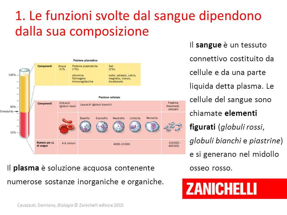 Cavazzuti, Damiano, Biologia © Zanichelli editore 2015 1. Le funzioni svolte dal sangue dipendono dalla sua composizione Il sangue è un tessuto connet