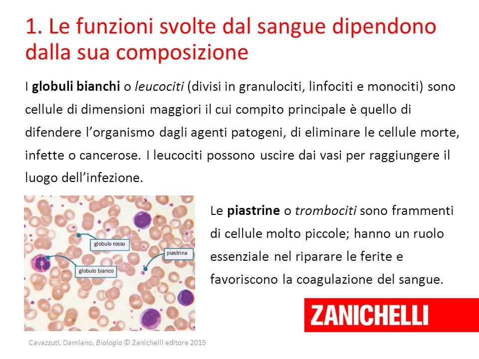 Cavazzuti, Damiano, Biologia © Zanichelli editore 2015 1. Le funzioni svolte dal sangue dipendono dalla sua composizione I globuli bianchi o leucociti