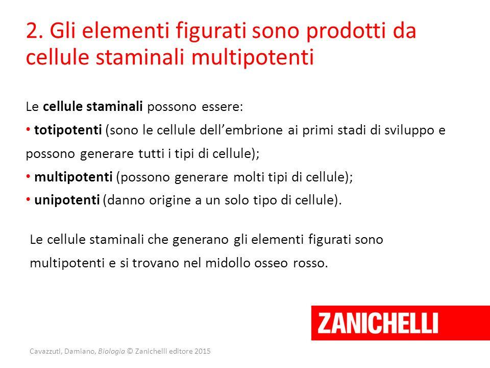 Cavazzuti, Damiano, Biologia © Zanichelli editore 2015 2. Gli elementi figurati sono prodotti da cellule staminali multipotenti Le cellule staminali p
