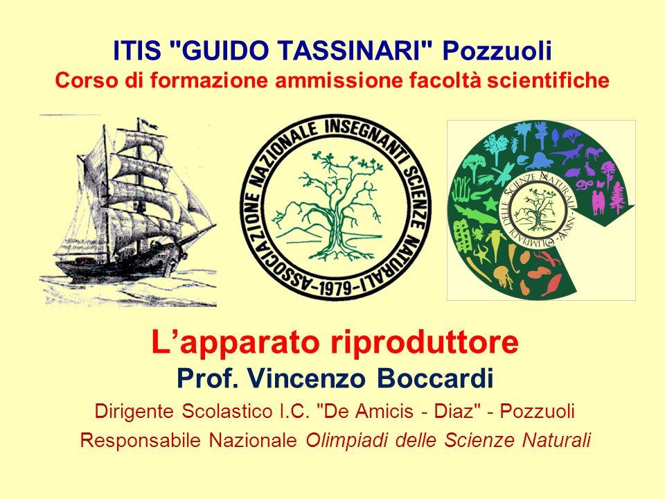 ITIS GUIDO TASSINARI Pozzuoli Corso di formazione ammissione facoltà scientifiche L'apparato riproduttore Prof.