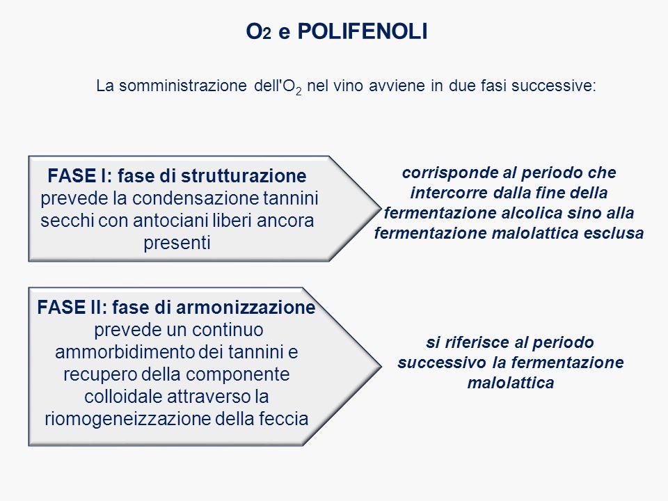 La somministrazione dell'O 2 nel vino avviene in due fasi successive: O 2 e POLIFENOLI corrisponde al periodo che intercorre dalla fine della fermenta