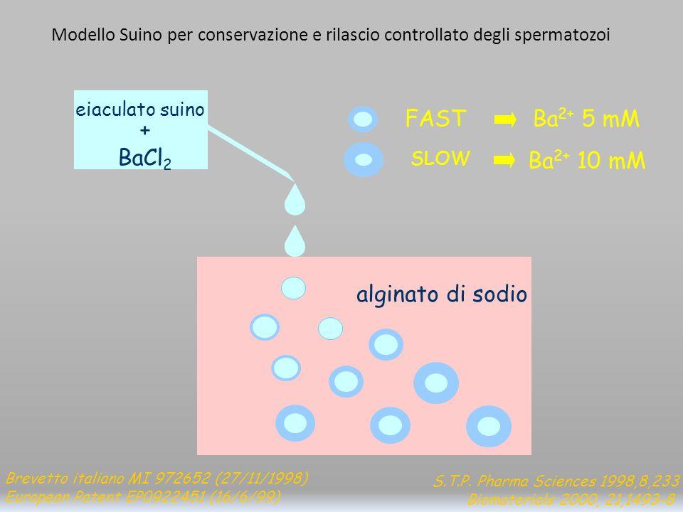S.T.P. Pharma Sciences 1998,8,233 Biomaterials 2000, 21,1493-8 alginato di sodio eiaculato suino + BaCl 2 FAST Ba 2+ 5 mM SLOW Ba 2+ 10 mM Brevetto it
