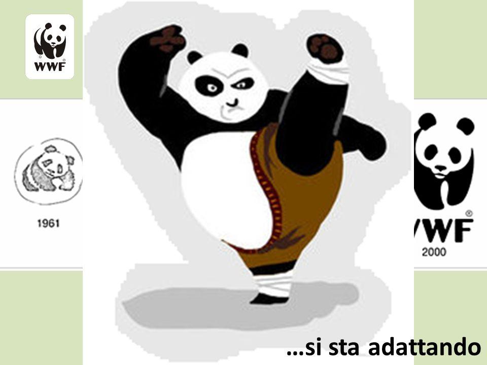 IL WWF STA CAMBIANDO… …si sta adattando