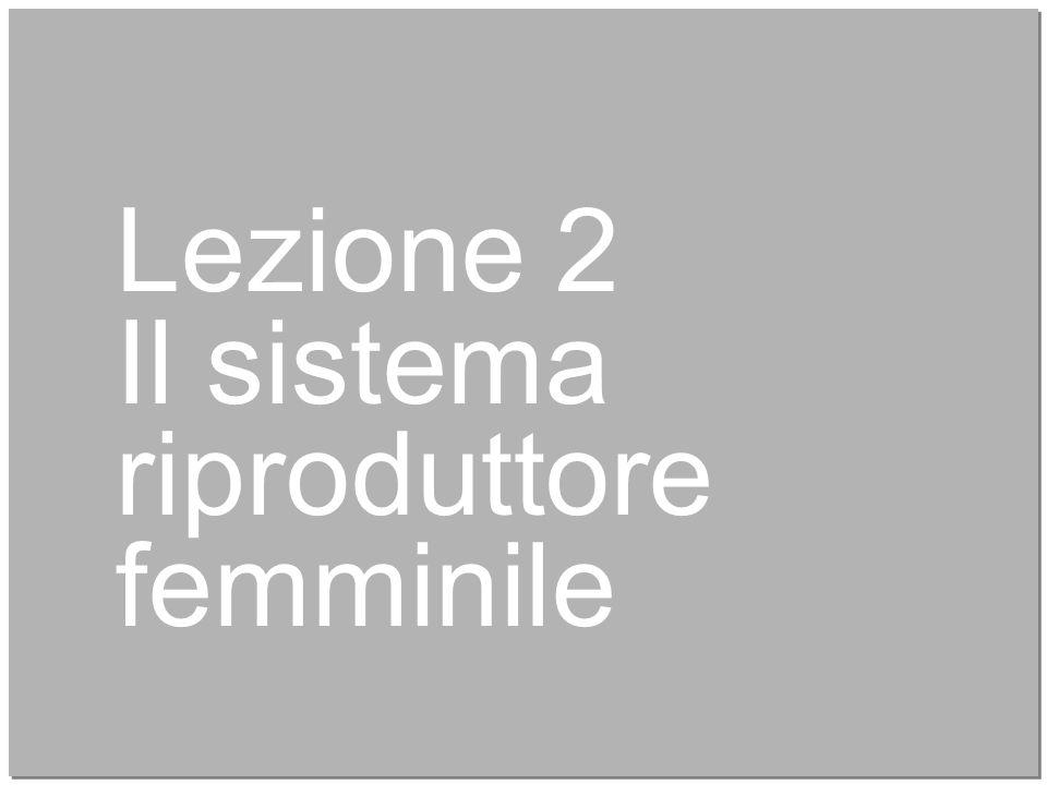 10 Lezione 2 Il sistema riproduttore femminile
