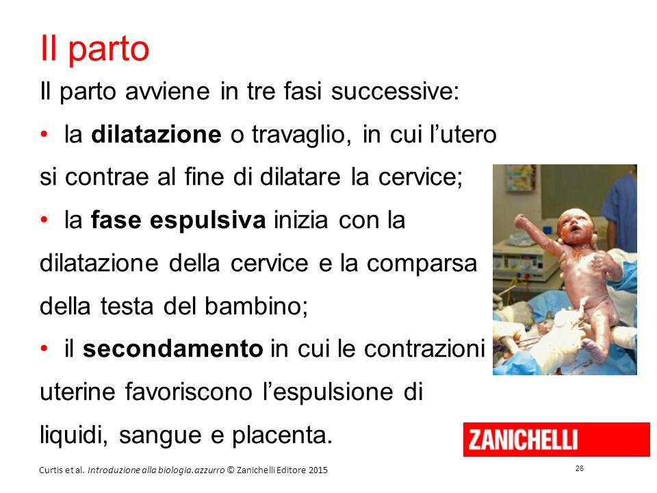 26 Curtis et al. Introduzione alla biologia.azzurro © Zanichelli Editore 2015 Il parto Il parto avviene in tre fasi successive: la dilatazione o trava