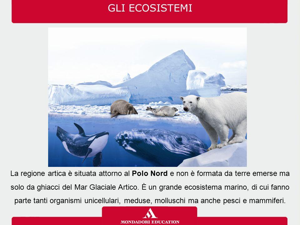 GLI ECOSISTEMI La regione artica è situata attorno al Polo Nord e non è formata da terre emerse ma solo da ghiacci del Mar Glaciale Artico. È un grand