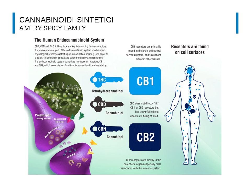 CANNABINOIDI SINTETICI A VERY SPICY FAMILY