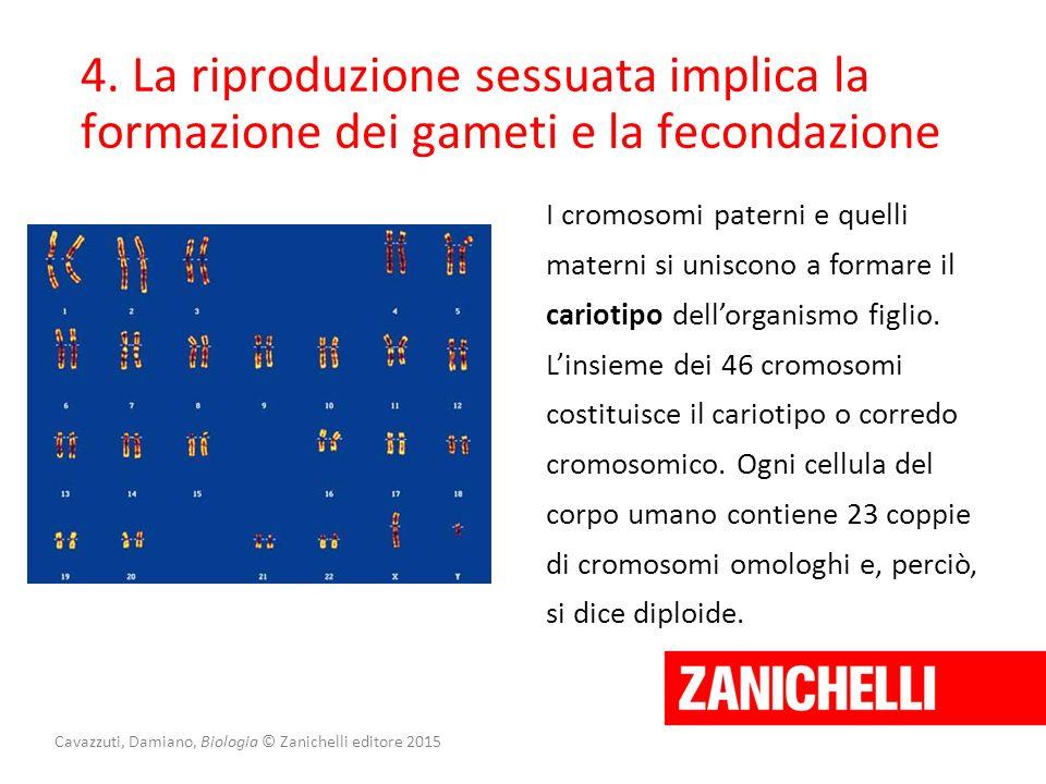 Cavazzuti, Damiano, Biologia © Zanichelli editore 2015 4. La riproduzione sessuata implica la formazione dei gameti e la fecondazione I cromosomi pate