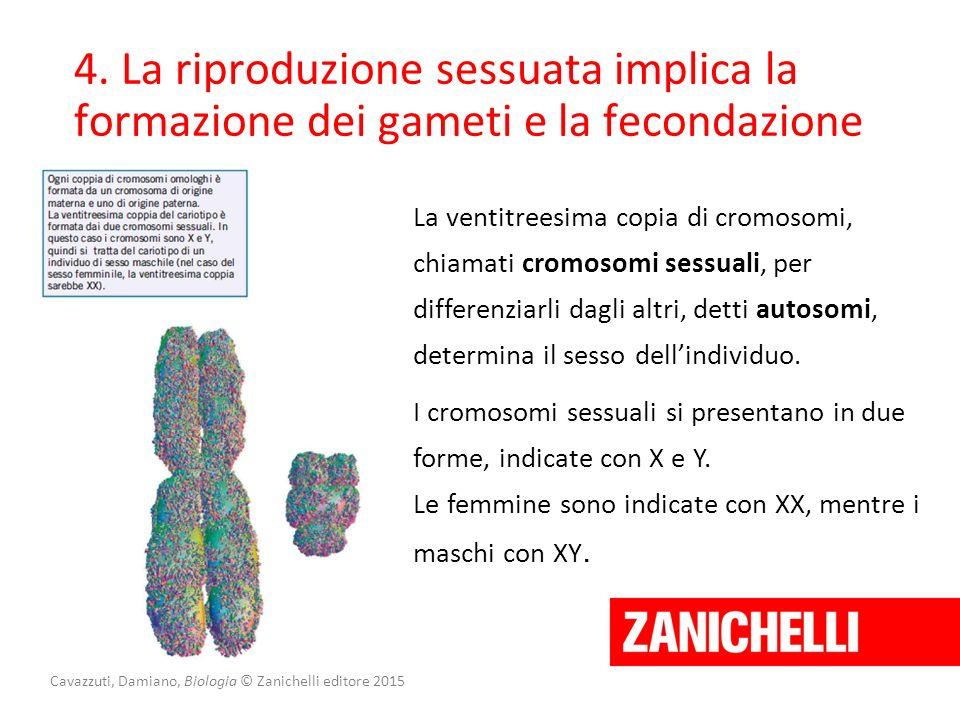 Cavazzuti, Damiano, Biologia © Zanichelli editore 2015 4. La riproduzione sessuata implica la formazione dei gameti e la fecondazione La ventitreesima