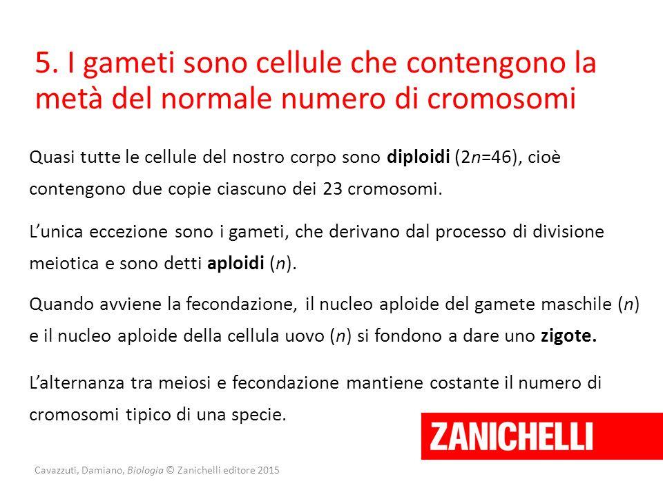 Cavazzuti, Damiano, Biologia © Zanichelli editore 2015 5. I gameti sono cellule che contengono la metà del normale numero di cromosomi Quasi tutte le