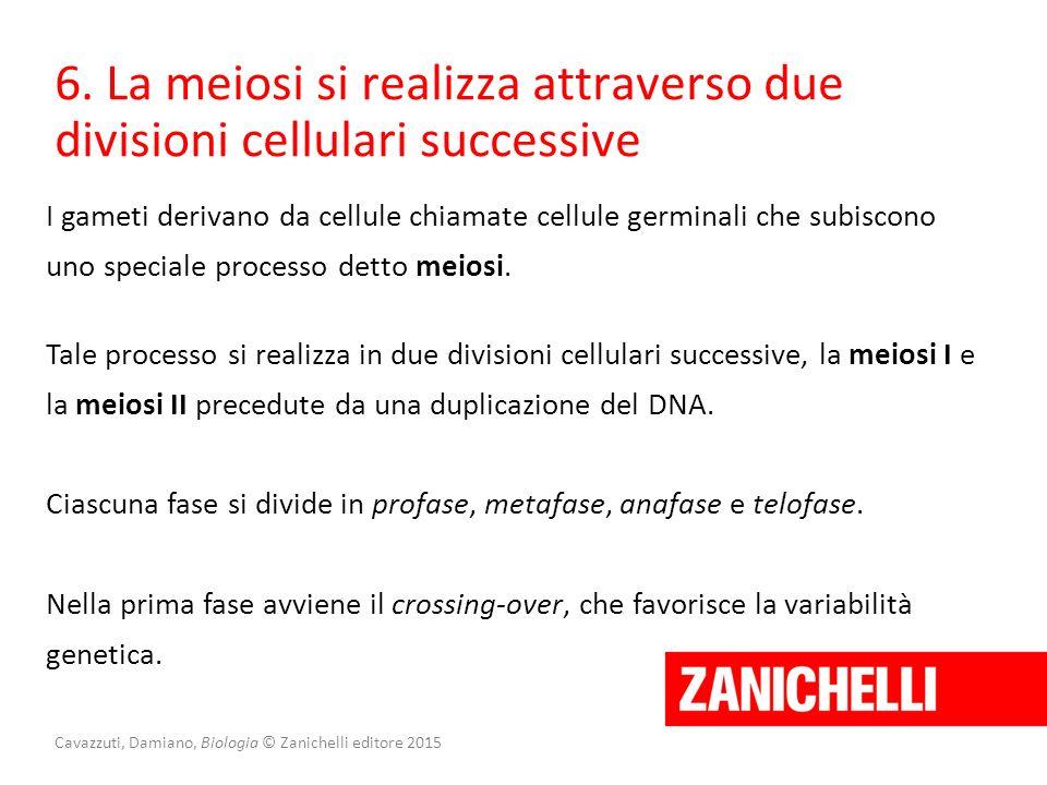 Cavazzuti, Damiano, Biologia © Zanichelli editore 2015 6. La meiosi si realizza attraverso due divisioni cellulari successive I gameti derivano da cel