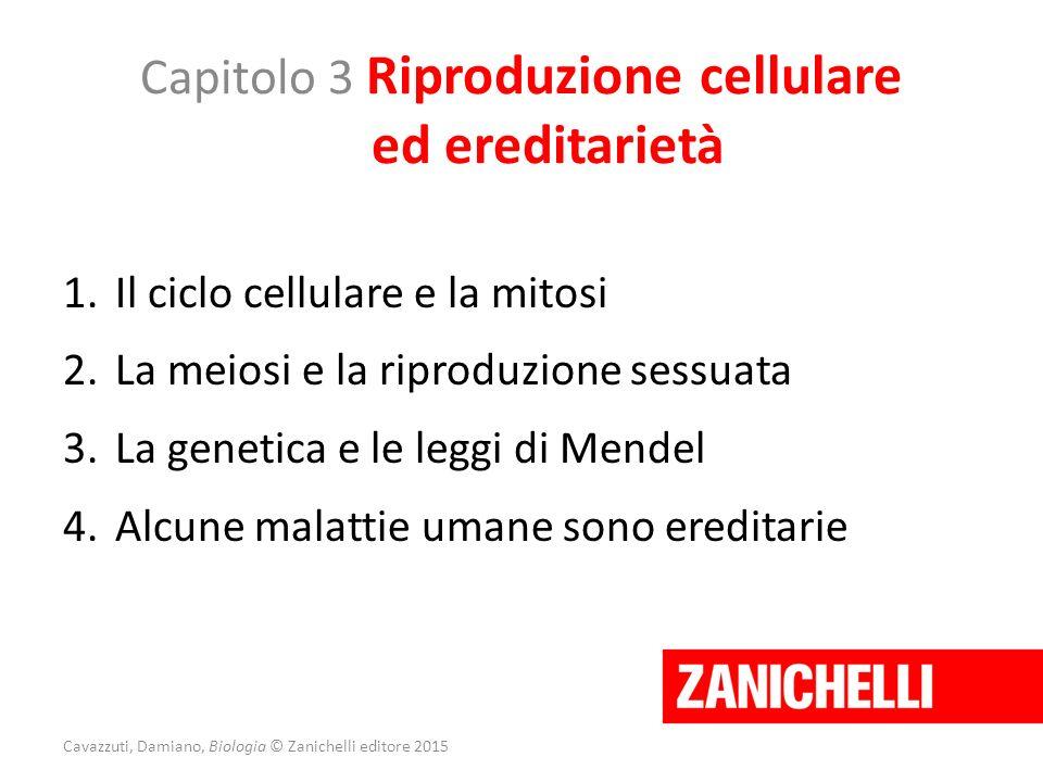 Capitolo 3 Riproduzione cellulare ed ereditarietà 1.Il ciclo cellulare e la mitosi 2.La meiosi e la riproduzione sessuata 3.La genetica e le leggi di