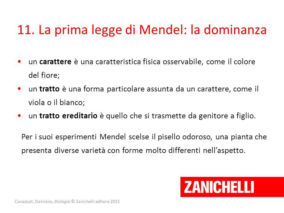 Cavazzuti, Damiano, Biologia © Zanichelli editore 2015 11. La prima legge di Mendel: la dominanza un carattere è una caratteristica fisica osservabile