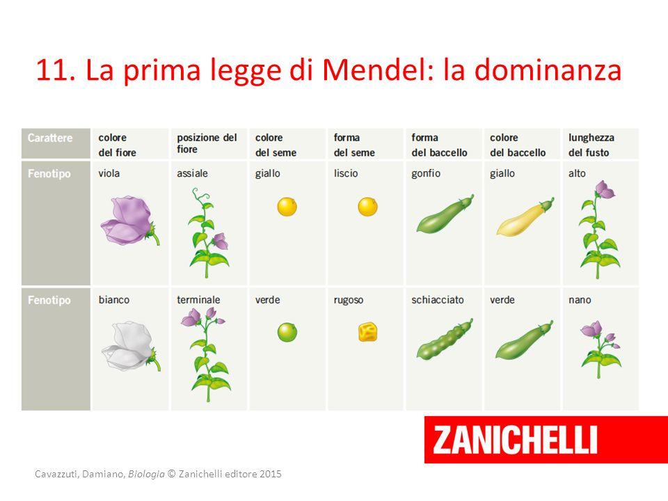 Cavazzuti, Damiano, Biologia © Zanichelli editore 2015 11. La prima legge di Mendel: la dominanza