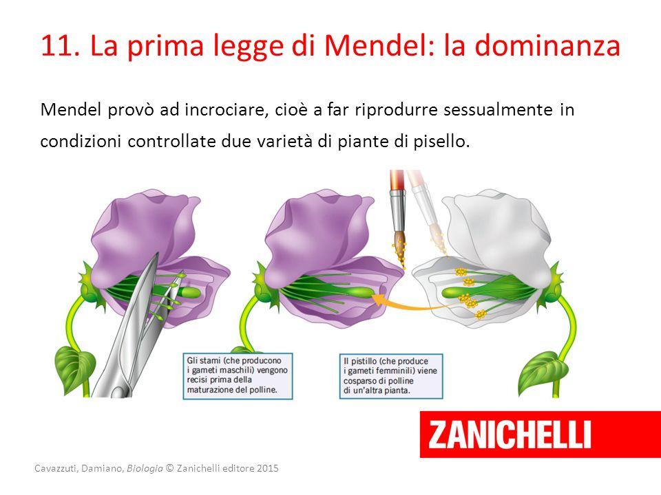 Cavazzuti, Damiano, Biologia © Zanichelli editore 2015 Mendel provò ad incrociare, cioè a far riprodurre sessualmente in condizioni controllate due va