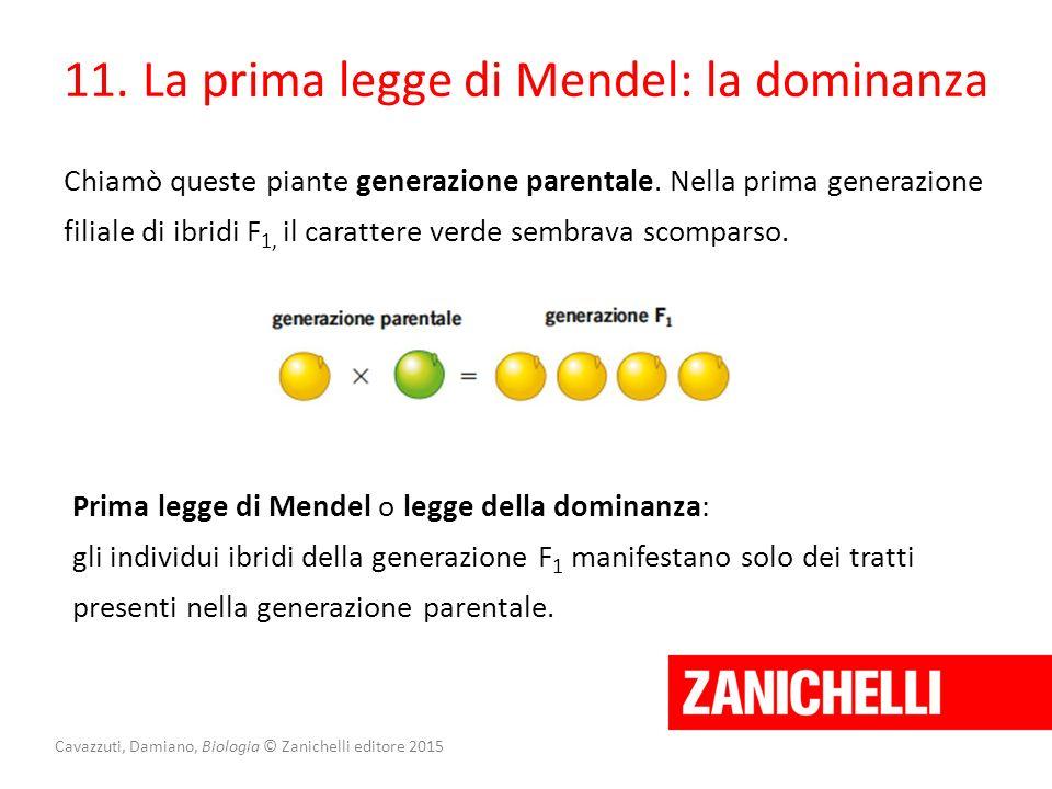 Cavazzuti, Damiano, Biologia © Zanichelli editore 2015 11. La prima legge di Mendel: la dominanza Chiamò queste piante generazione parentale. Nella pr