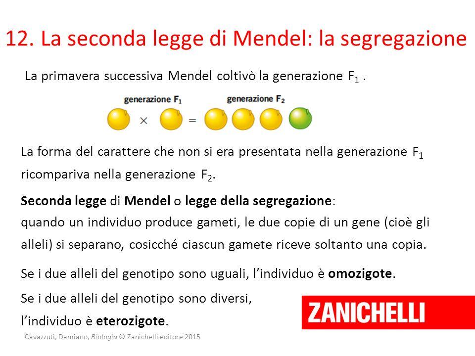 Cavazzuti, Damiano, Biologia © Zanichelli editore 2015 12. La seconda legge di Mendel: la segregazione La primavera successiva Mendel coltivò la gener