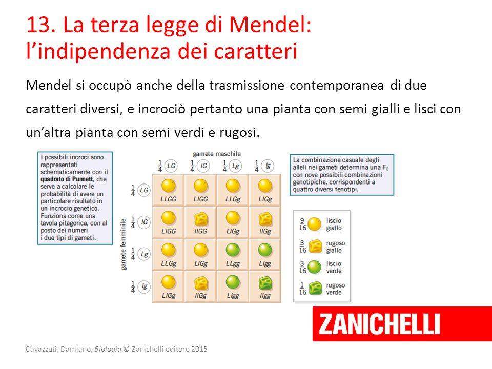 Cavazzuti, Damiano, Biologia © Zanichelli editore 2015 13. La terza legge di Mendel: l'indipendenza dei caratteri Mendel si occupò anche della trasmis