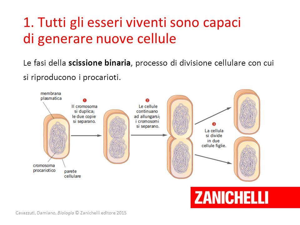 Cavazzuti, Damiano, Biologia © Zanichelli editore 2015 1. Tutti gli esseri viventi sono capaci di generare nuove cellule Le fasi della scissione binar