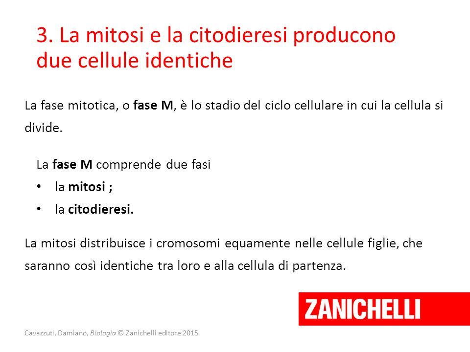 Cavazzuti, Damiano, Biologia © Zanichelli editore 2015 3. La mitosi e la citodieresi producono due cellule identiche La fase mitotica, o fase M, è lo