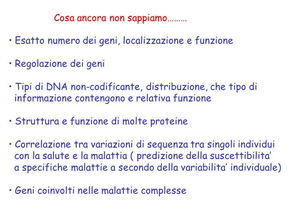 Cosa ancora non sappiamo……… Esatto numero dei geni, localizzazione e funzione Regolazione dei geni Tipi di DNA non-codificante, distribuzione, che tip