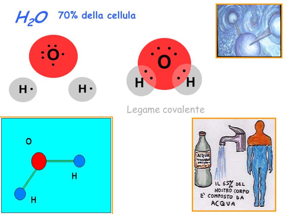 H2OH2O Legame covalente 70% della cellula