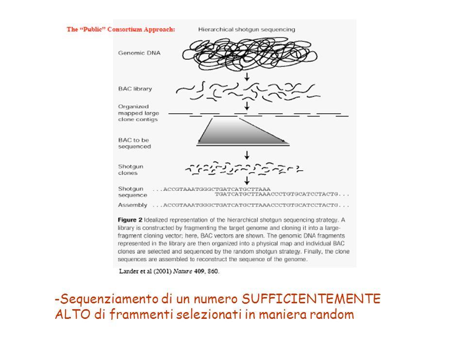 -Sequenziamento di un numero SUFFICIENTEMENTE ALTO di frammenti selezionati in maniera random