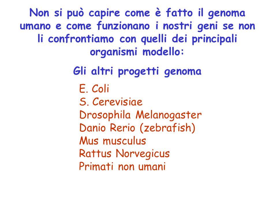 Non si può capire come è fatto il genoma umano e come funzionano i nostri geni se non li confrontiamo con quelli dei principali organismi modello: Gli altri progetti genoma E.