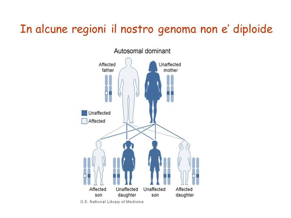 8 In alcune regioni il nostro genoma non e' diploide